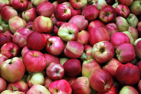 Harvest time along the Fruit Loop